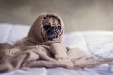 Does Your Pet Have Allergies 4 Summer Symptoms To Watch Out For