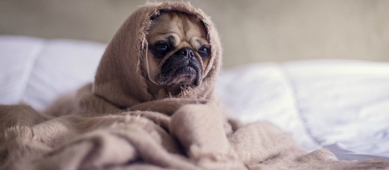 Does Your Pet Have Allergies? 4 Summer Symptoms To Watch Out For