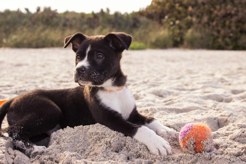 Paw-sible Perfection: 3 Strategies For Prepping A Puppy Road Trip