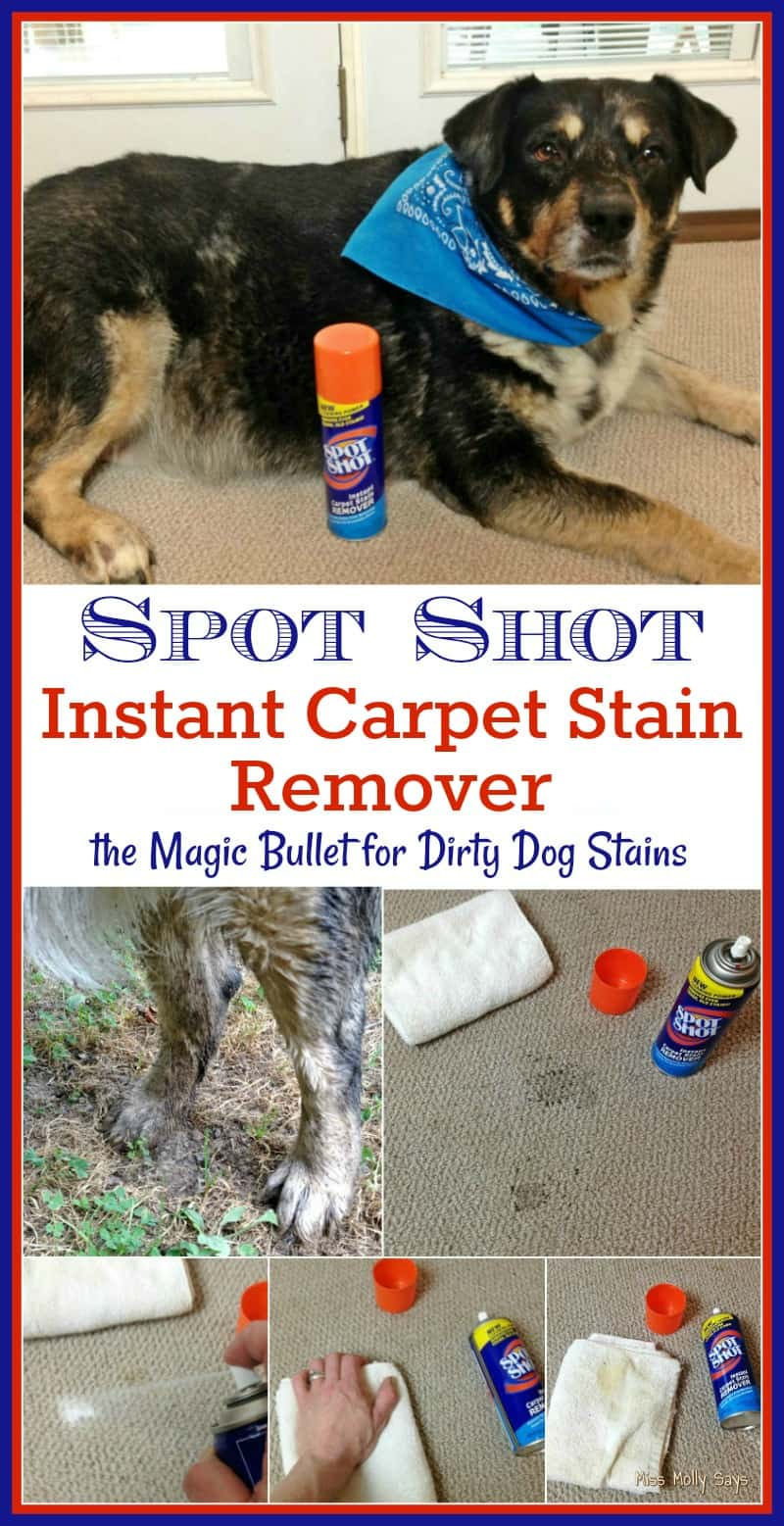 Spot Shot Instant Carpet Stain Remover is the Magic Bullet for Dirty Dog Stains #SpotShot