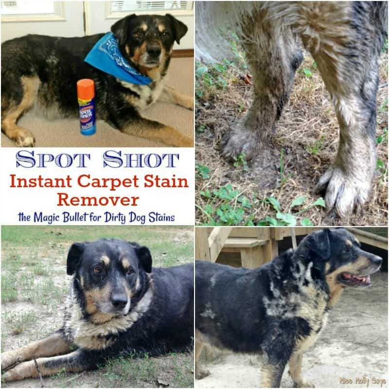 best way to remove pet stains from white carpet