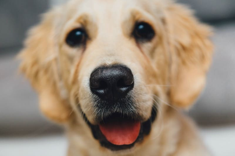 4 Pest Related Illnesses To Watch For In Your Furry Friend