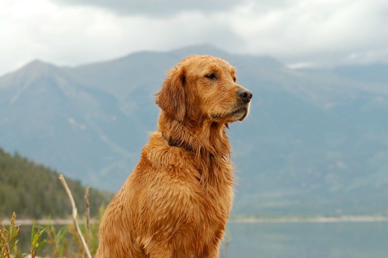 Feeling Guilty For Traveling Without Your Pet? 6 Steps To Overcome It