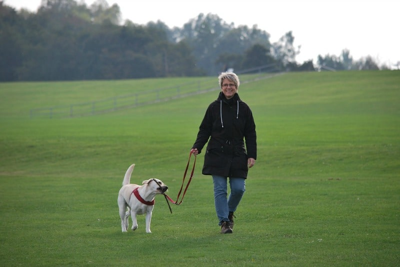 Things That Cause Stress in Dogs - Going to a boarding kennel
