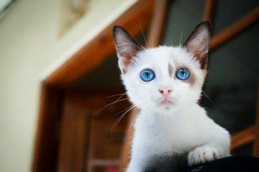 Happy Kitty, 4 Ways to Improve Your Feline's Health Every Day