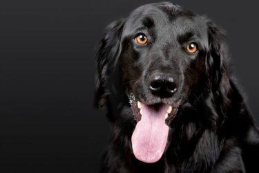 Helpful Companion 5 Barking Signs You Need a Service Dog