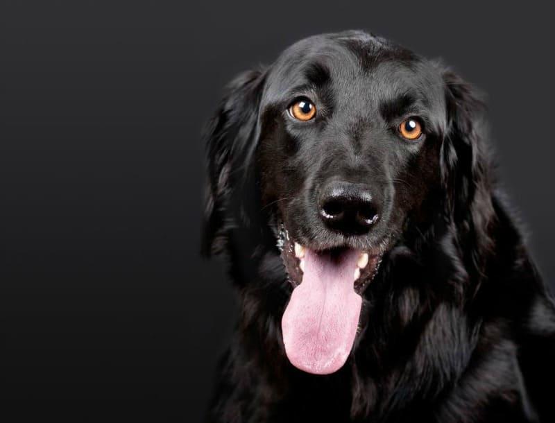 Helpful Companion: 5 Barking Signs You Need a Service Dog