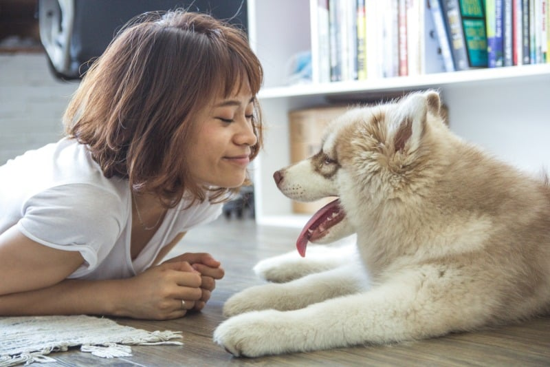 5 Things You Should Do Before Leaving Your Pet with a Friend