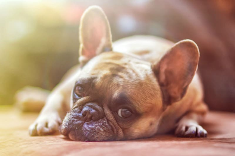 Things That Cause Stress in Dogs - Loneliness