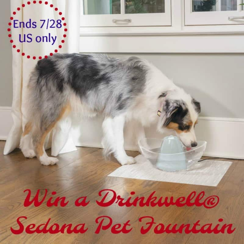 PetSafe Drinkwell Sedona Pet Fountain Giveaway button