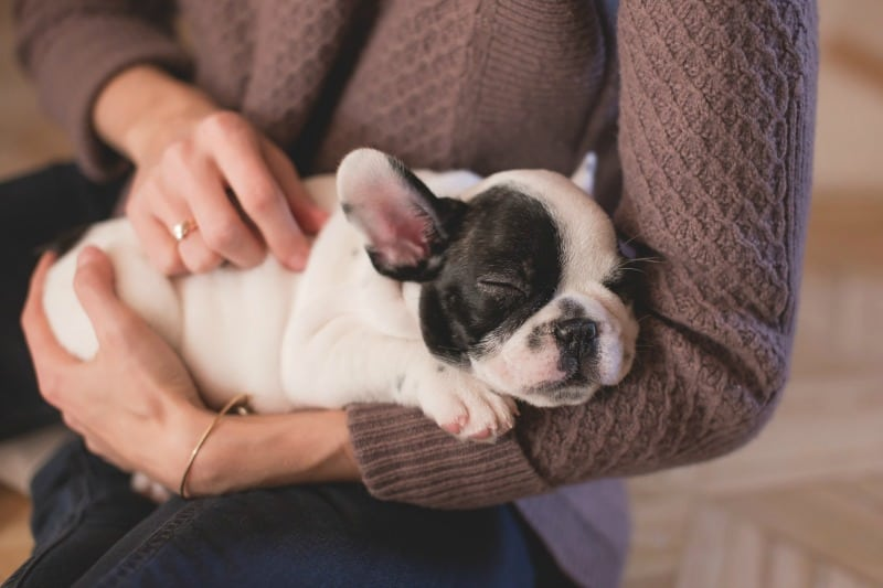 Puppy Party: 3 Ideas To Celebrate Your Furbaby's Birthday