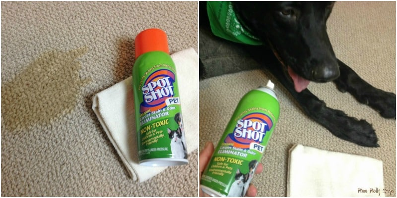 Spot Shot Pet Instant Carpet Stain & Odor Eliminator