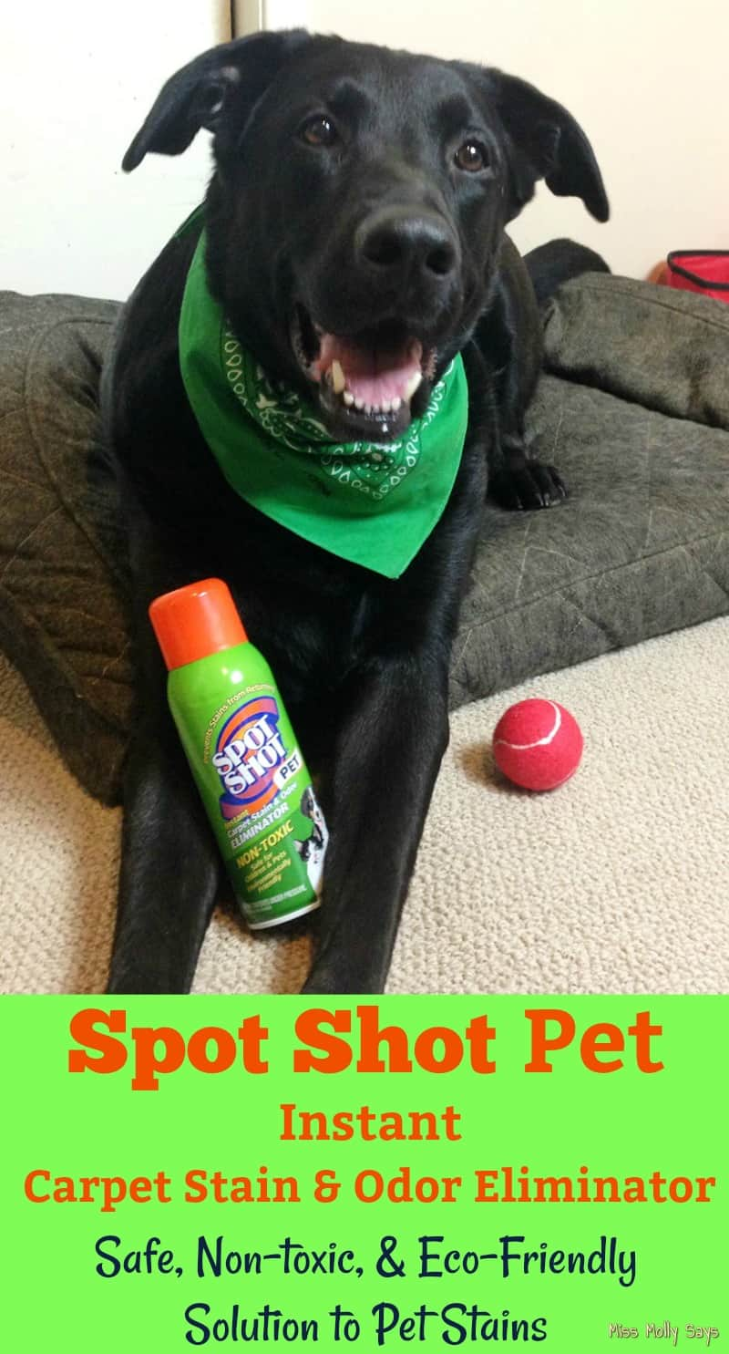 Spot Shot Pet Instant Carpet Stain and Odor Eliminator