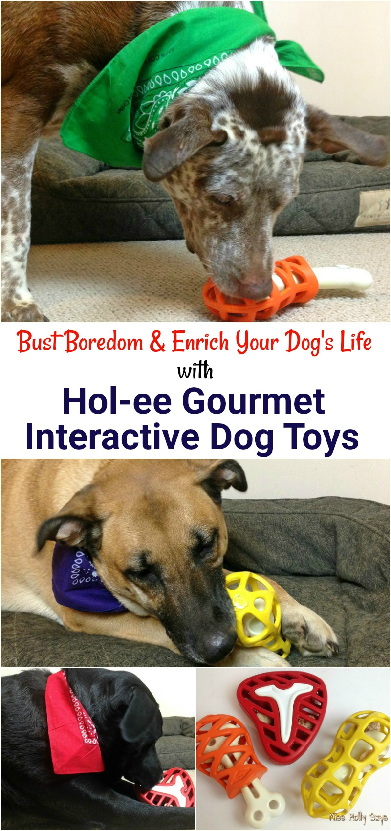 Bust Boredom and Enrich Your Dog's Life with the Hol-ee Gourmet Line of Interactive Dog Treat Toys