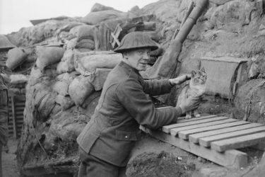 Cats and War: The Little-Known Military Use of Felines in WWI