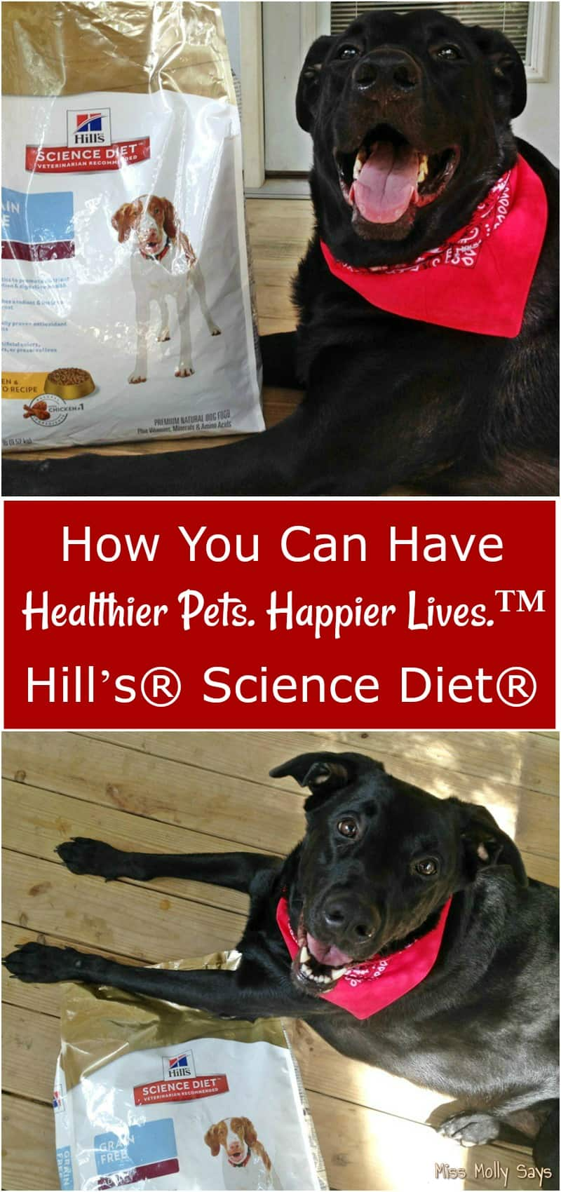 I love my dogs and want them to have long happy lives! Find out how you can have Healthier Pets. Happier Lives.™ - PLUS, enter the PAWSOME Hill's Pet Nutrition Sweepstakes for a chance to win $100.00 to go towards your next vet checkup! AND, you can grab a $10 Rebate good on any purchase of 7 lbs or larger bag select Hill's® Science Diet® pet food! #HillsTransformingLives