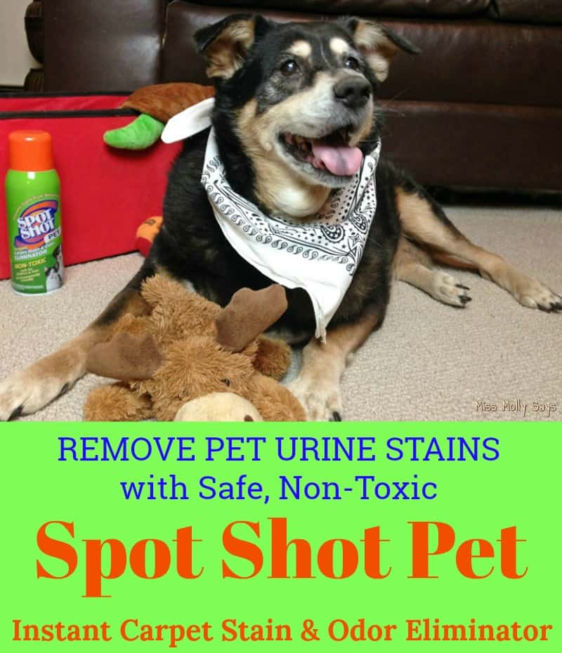 Dog Smell Of Rug: Remove Pet Urine Stains With Safe And Non-Toxic Spot Shot