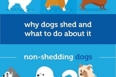 Why dogs shed and what to do about it