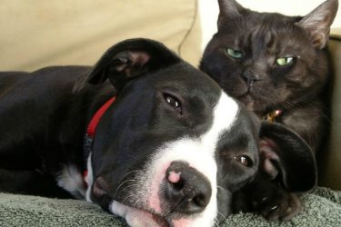 Cautious Pet Owners How to Insure Your Fur Babies