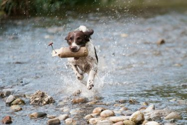 Naturally Boosting Your Dog's Immune System