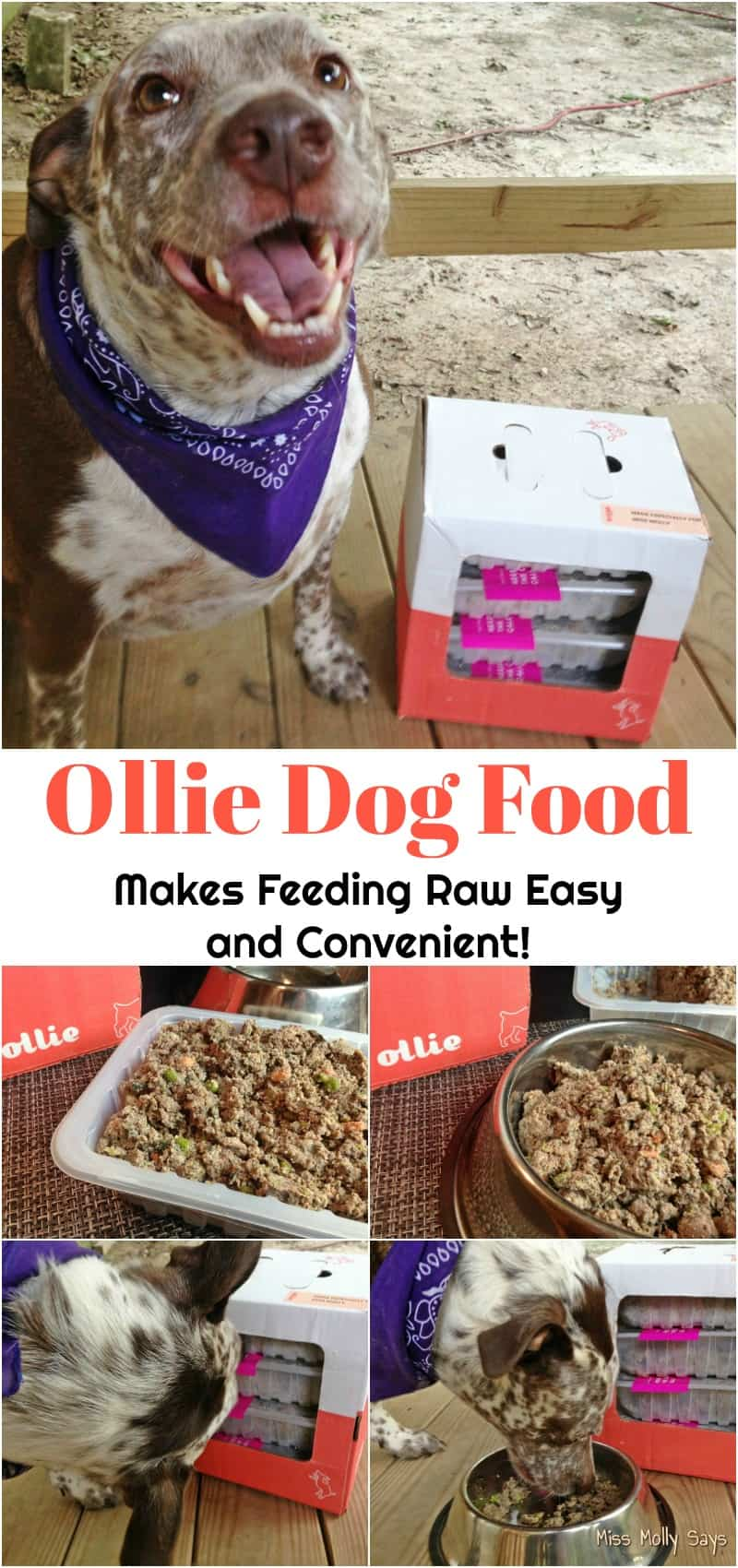 Ollie Dog Food Makes Feeding Raw Easy and Convenient!