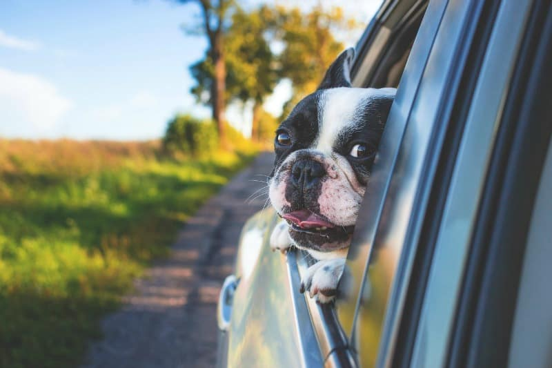 Pet Preference, 4 Tips for Moving Cross-Country with Dogs