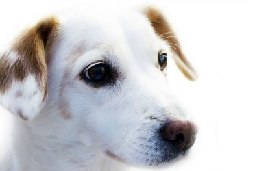 Pet Surgery: What to Know about Your Dog and Anesthesia