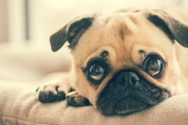4 Situations that Stress Pets out & How to Minimize the Impact