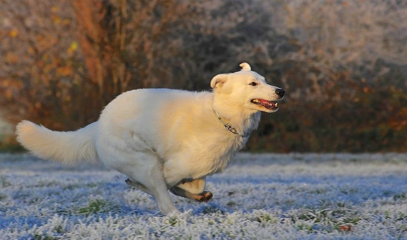 Protecting Your Pet from Common Winter Hazards