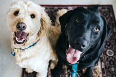 3 Tips for Handling an Emergency with Your Pet