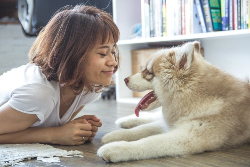 Options to Take When You Can't Afford Proper Pet Care