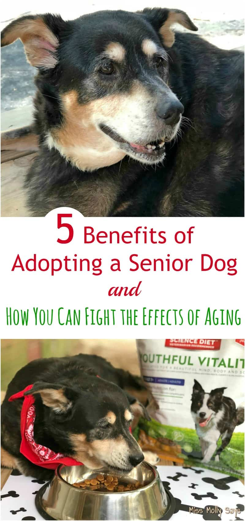 5 Benefits of Adopting a Senior Dog and How You Can Fight the Effects of Aging #hillstransforminglives