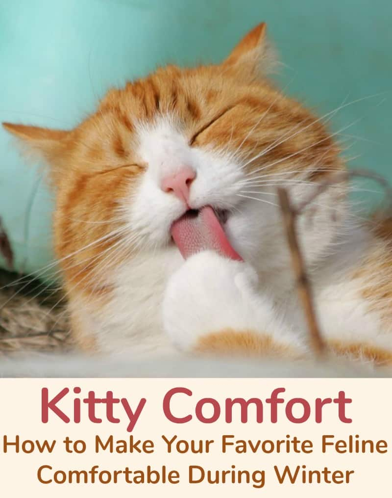 Kitty Comfort, How to Make Your Favorite Feline Comfortable During Winter