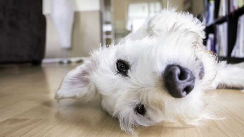 Paws and Claws: 3 Ways Your Flooring Choices Affect Your Furry Friends