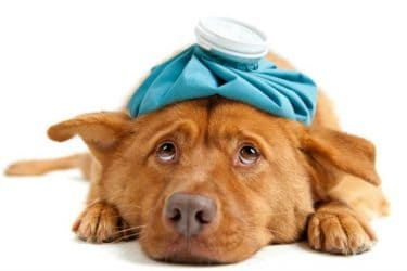 Sick Puppy? 5 Tell-Tail Signs Your Dog Needs an Animal Hospital