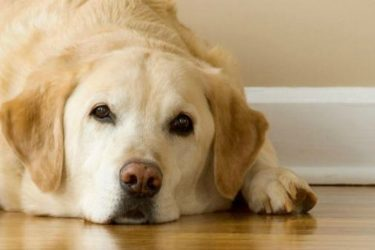 How to Help an Overweight Dog Lose Weight