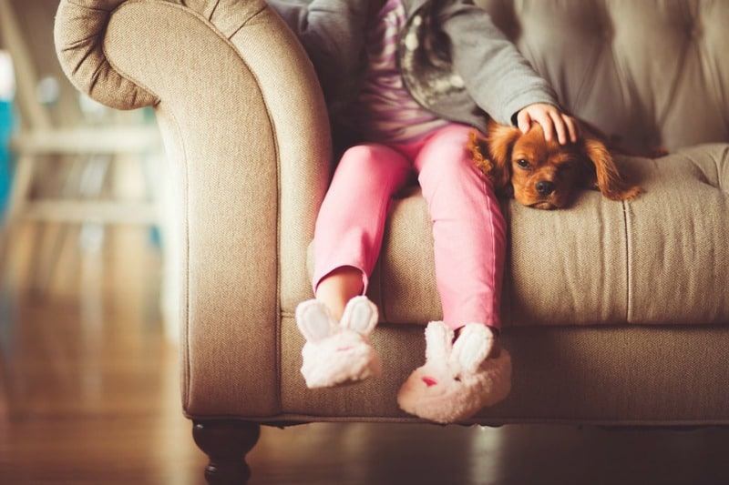 The Basics of Pet Proofing Your Home