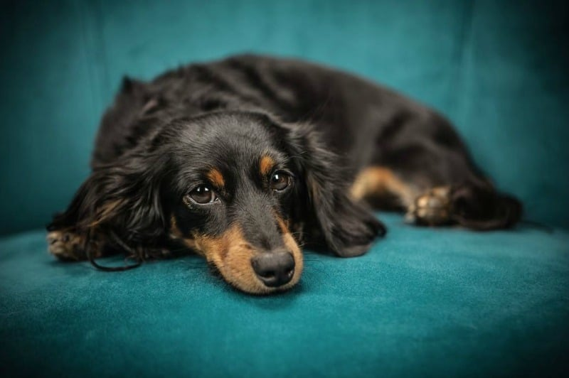 5 Health Issues That Threaten Modern Dogs