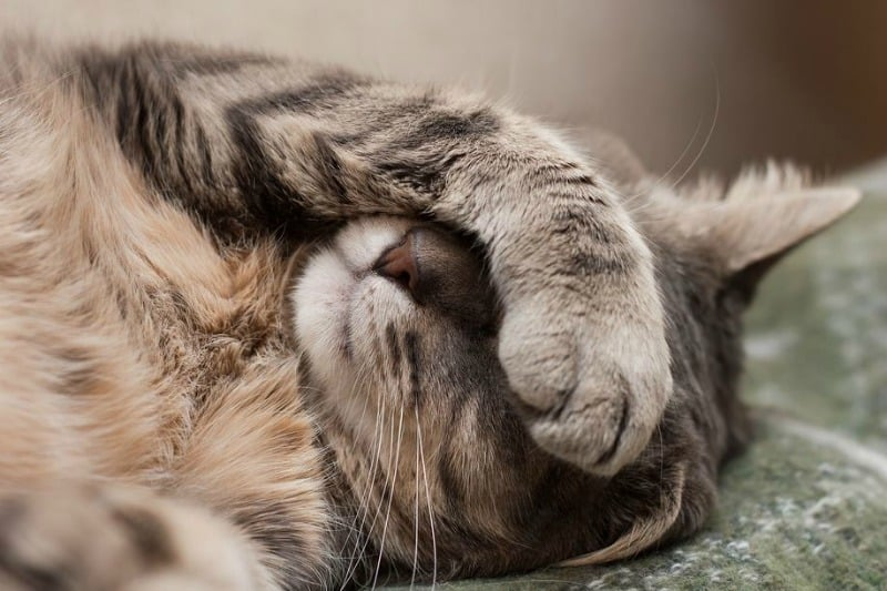 Here Kitty Kitty Kitty: 4 Basic Steps to Keeping Your Cat Happy and Healthy