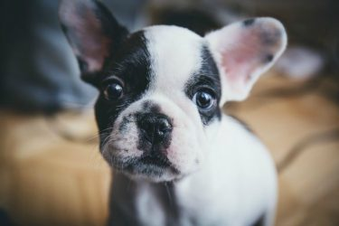 Tips To Introduce A Friends Dog Into Your Dogs Home