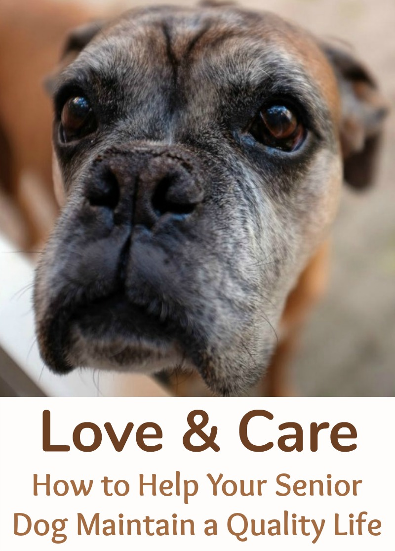 Love & Care - How to Help Your Senior Dog Maintain a Quality Life