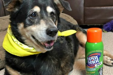 Tips for Keeping Your Home Clean in Winter with Dogs #SpotShot
