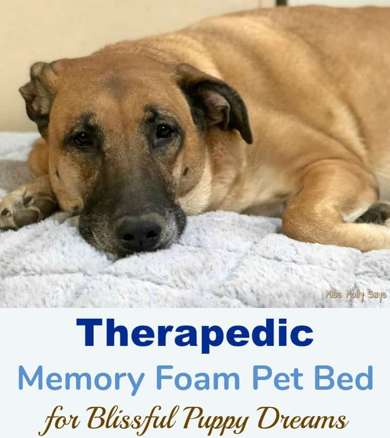 Therapedic Memory Foam Pet Bed for Blissful Puppy Dreams