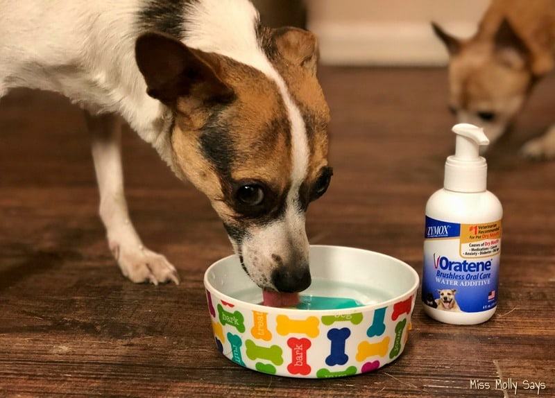 Protect Your Pet's Dental Health with Oratene Brushless Oral Care #petdentalhealth