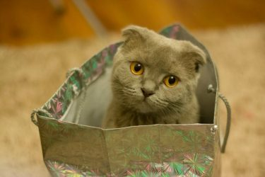 Felines Are Family 4 Benefits to Owning Cats