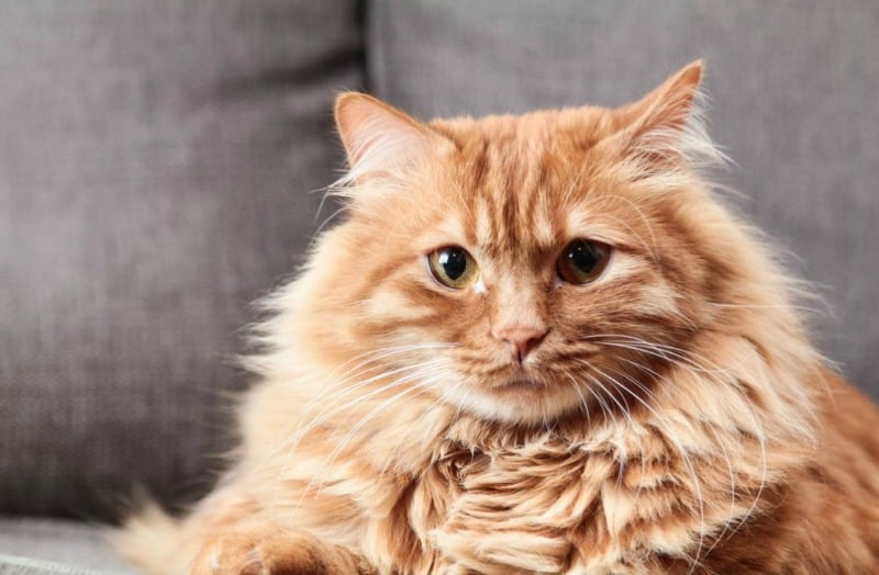 Pet Shedding: How to Minimize the Effects