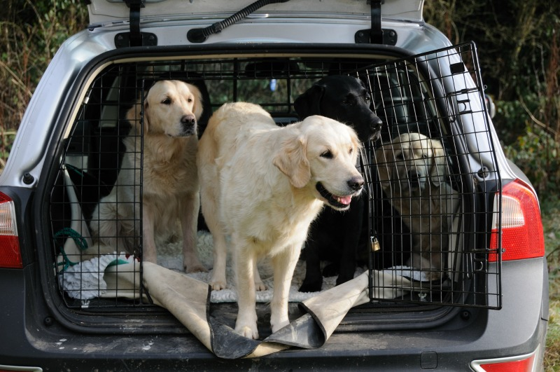 Ways to Travel Safely with Your Dog in a Car