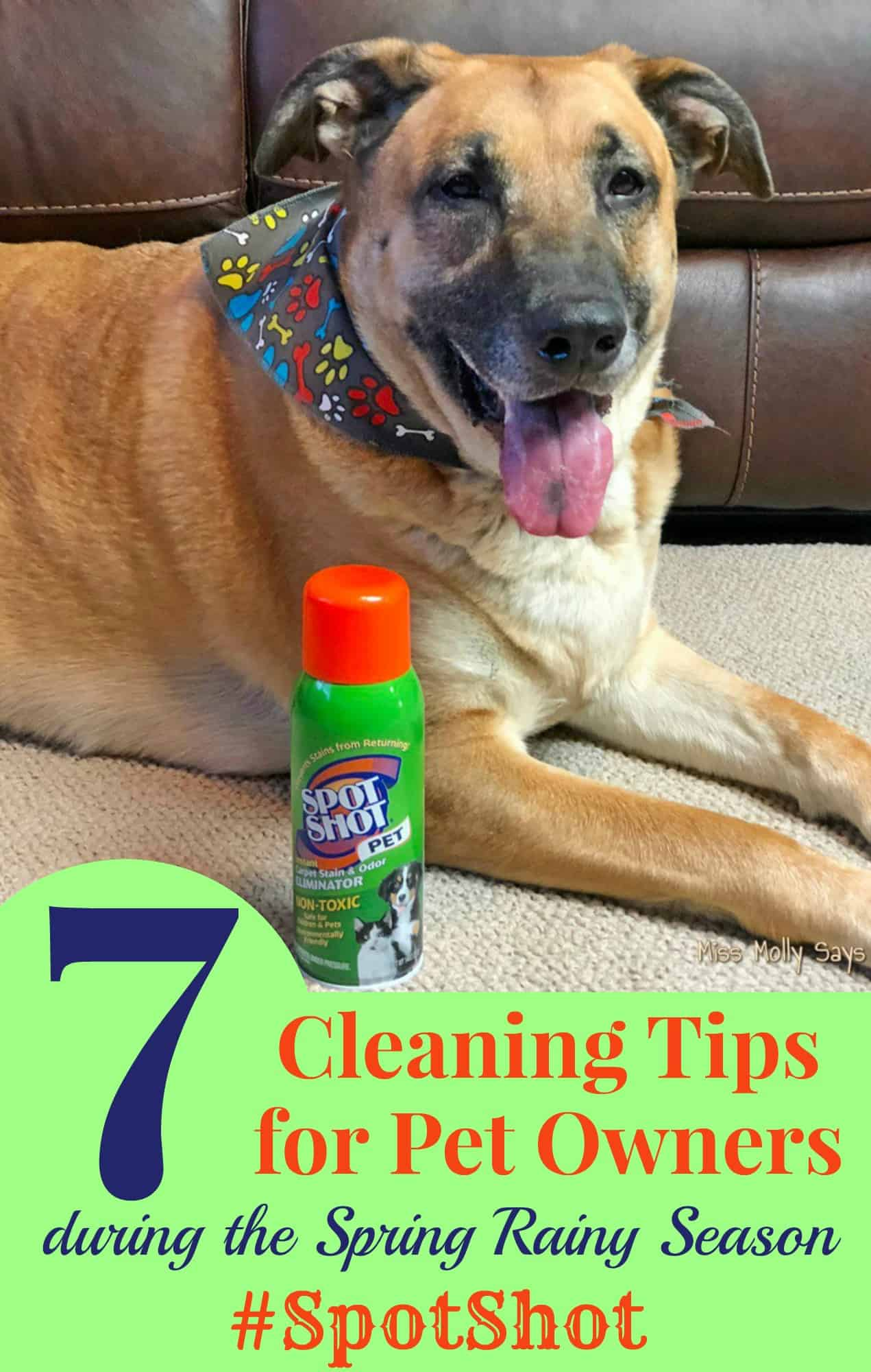 7 Cleaning Tips for Pet Owners during the Spring Rainy Season