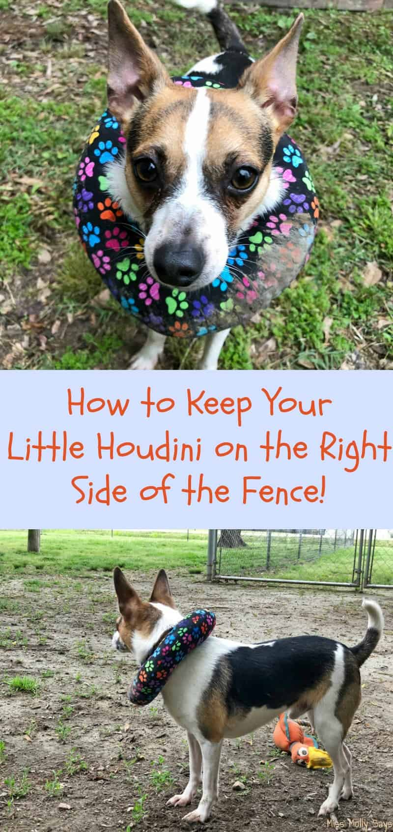 How to Keep Your Little Houdini on the Right Side of the Fence