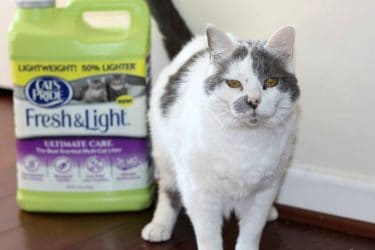 How to Help Save Millions of Cats with a Trip to the Store #LitterForGood #CatsPride